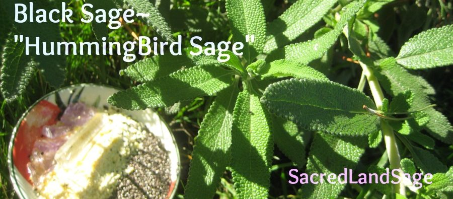 cropped-blacksage-79581.jpg
