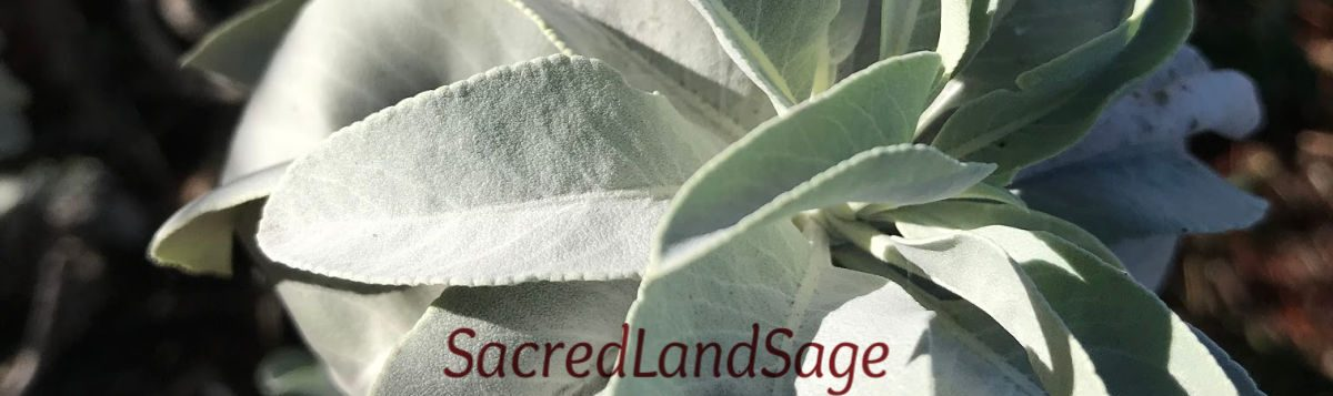 cropped-california-white-sage-m-img_1795.jpg