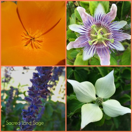 Blooms-SacredLandSage